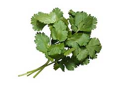 Cilantro Essential Oil Uses