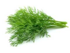 Dill Essential Oil Uses