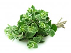 Oregano Essential Oil Uses