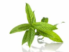 Spearmint Essential Oil Uses