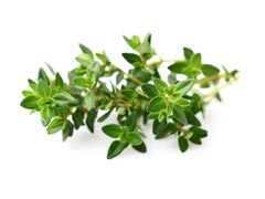 Thyme Essential Oil Uses